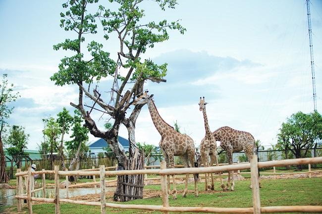 Công viên động vật river safari VinPearl Land Nam Hội An