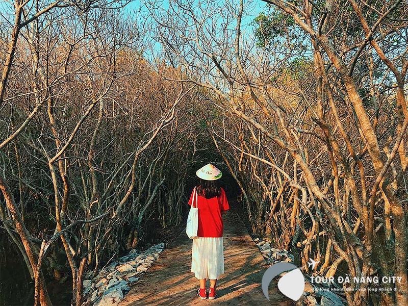 rừng rú chá Huế