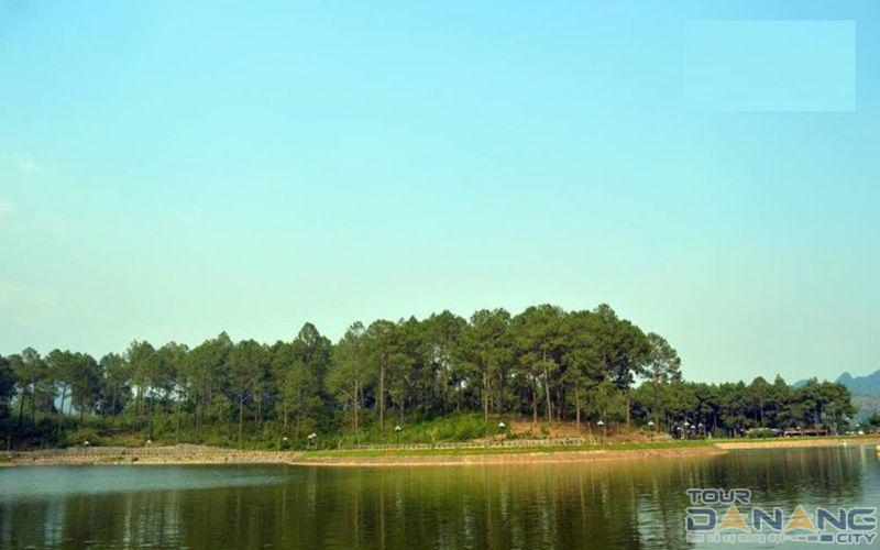 Rừng thông Xã Đông Sang